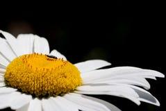 Makroschussblumenhintergrund lizenzfreie stockfotografie