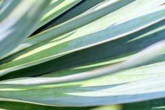 Makrosidor av palmliljan planterar, grön bakgrund blurriness royaltyfria bilder