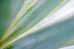 Makrosidor av palmliljan planterar, grön bakgrund blurriness royaltyfria foton