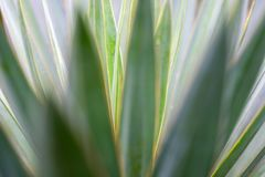 Makrosidor av palmliljan planterar, grön bakgrund blurriness arkivbilder
