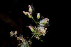 Makrosikt för lösa blommor Arkivfoton