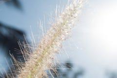 Makrosikt för lösa blommor Royaltyfri Bild