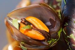 Makroskott av en mussla i ett skal som är kokt med lovage Arkivbilder
