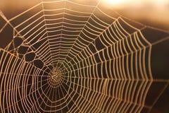 Makroskott av en spindelrengöringsduk i solskenbakgrundstexturen Arkivbilder
