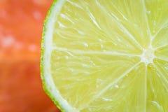 Makroskott av limefrukt royaltyfri bild