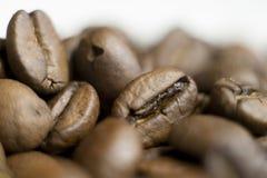 Makroskott, kaffebönor, härlig bakgrund arkivfoton