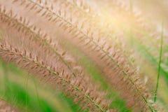 Makroskottdetalj av den härliga gräsblomman på suddiga gröna sidor Bakgrund för för fridsamt för förälskelse begrepp och lyckligt royaltyfria foton