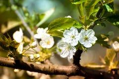 Makroskottet av flowersSpring tid för den ljust gula maskrosen, djur, natur väcker, fåglar är sjungande, blommor startar Arkivfoton