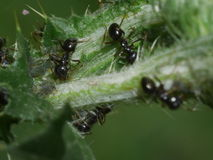 Makrospindel - manlueshamatställe som jag önskar att omfamna dina spindlar och malar Arkivfoto