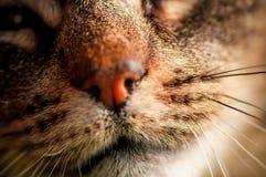Makrost?ende med den selektiva fokusen av inhemsk katts mun och morrh?r royaltyfri fotografi