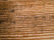 Makrotextur - trä - korn Royaltyfri Bild