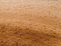 Makrotextur - trä - korn arkivfoto