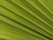 Makrotextur - växter - gömma i handflatan ormbunksblad Arkivfoto