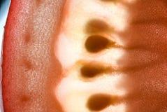 Makrotomate stockbild