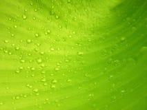 Makrovattensmå droppar på bananbladet Royaltyfria Foton