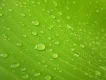 Makrovattensmå droppar på bananbladet Arkivfoton