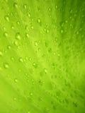 Makrovattensmå droppar på bananbladet Royaltyfri Bild