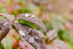Makrovattensmå droppar på växten Royaltyfria Bilder