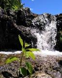 Makrowasserfall stockbild