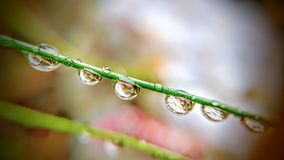 Makrowassertropfen auf Gras 1 Stockfoto