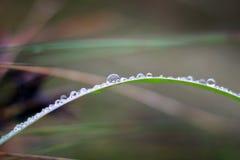 Makrowaterdrop Royaltyfria Foton