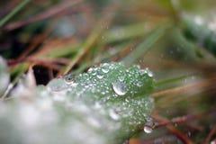 Makrowaterdrop Fotografering för Bildbyråer