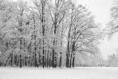 Maksimir Park in the winter. Royalty Free Stock Image