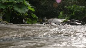 Makt av krökningen för ström för bergChvizepse flod i höst, kardborre, Medoveevka arkivfilmer