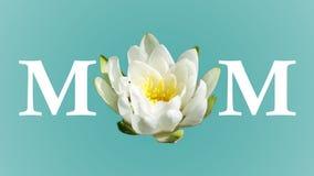 Makt av mammablomman royaltyfria foton
