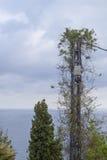 Maktstolpe med den närliggande lianväxten havet Royaltyfri Foto