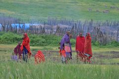 Makuyuni, Tanzanie, le 9 février 2016 : Les gens de la tribu de Maasai photos stock