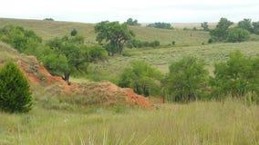 Malört och träd i dalen Arkivfoto