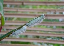 Mal Caterpillar arkivfoto