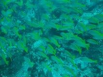 Mal regardant des poissons photographie stock libre de droits