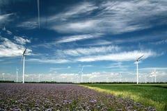 mal wind Fotografering för Bildbyråer