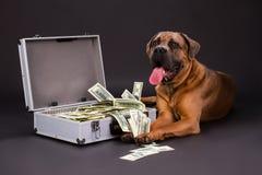 Mala de viagem completamente dos dólares e do cão enorme Fotografia de Stock