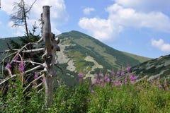 Mala Fatra góry, Sistani Zdjęcie Stock