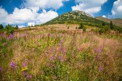 Mala Fatra, Slovakia Stock Images