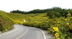 Mala hierba amarilla del girasol mexicano Foto de archivo libre de regalías