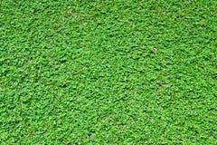 Mala hierba de la hierba Imagen de archivo libre de regalías