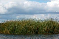 Mala hierba del agua Imágenes de archivo libres de regalías