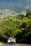 Mala hierba del girasol mexicano Fotos de archivo