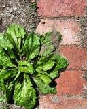 Mala hierba del jardín Imágenes de archivo libres de regalías
