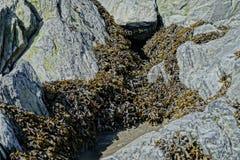 Mala hierba del mar Foto de archivo libre de regalías