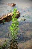 Mala hierba en agua Imágenes de archivo libres de regalías