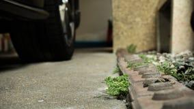 Mala hierba en el estacionamiento del coche imagen de archivo libre de regalías