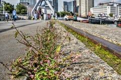 Mala hierba en las pistas foto de archivo
