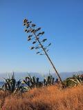 Mala hierba gigante, cayendo abajo Fotos de archivo