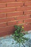Mala hierba que crece a través de la grieta en el pavimento Fotos de archivo libres de regalías
