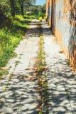 Mala hierba que crece a través de la grieta en el pavimento Foto de archivo